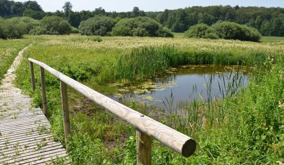 Cycling in Wallonia at the Grendel marshes in Attert